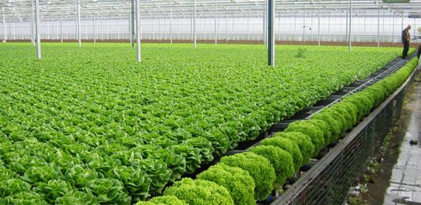 Nông nghiệp hữu cơ - khó khăn trong kết nối người sản xuất (25/8/2018)
