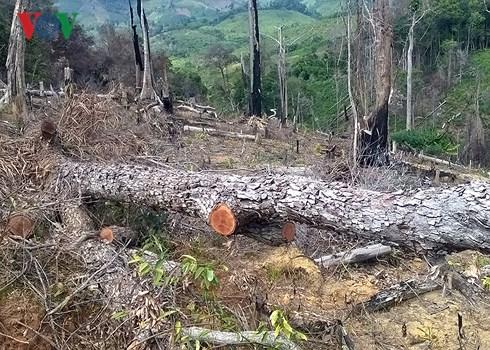 Đắk Lắk: Vẫn tiếp tục giao rừng cho doanh nghiệp làm mất rừng (16/8/2018)