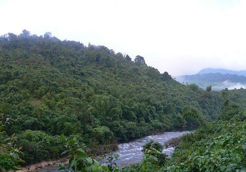 Phục hồi rừng tự nhiên để giảm nhẹ thiệt hại do biến đổi khí hậu gây ra (16/1/2019)