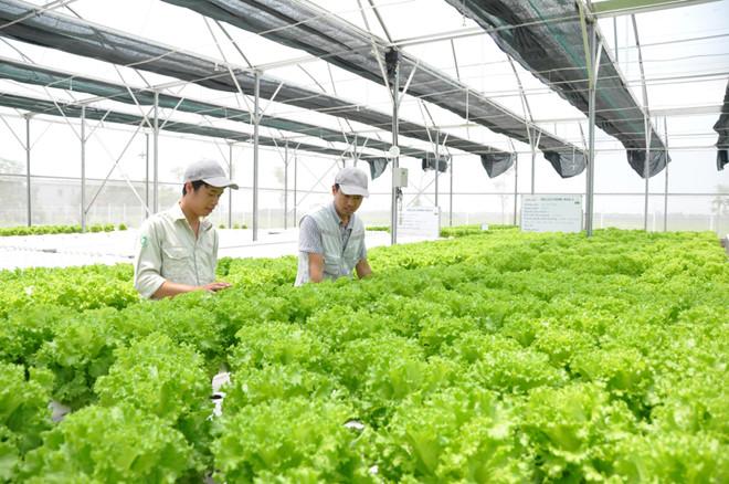 Hợp tác quốc tế hỗ trợ phát triển nông nghiệp công nghệ cao (11/1/2019)