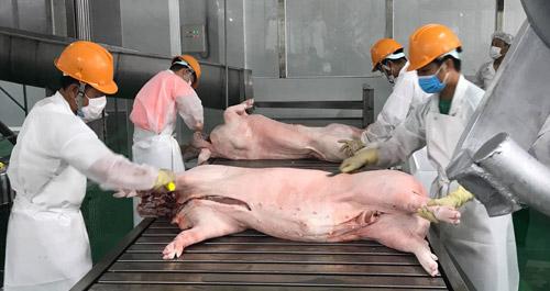 Xuất khẩu thịt lợn của Việt Nam có sự tăng trưởng ấn tượng trong năm 2018, nhưng vẫn còn nhiều điểm nghẽn cần khắc phục (2/1/2019)
