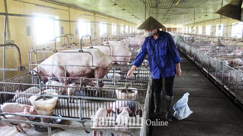 Kiểm soát dịch bệnh trên đàn vật nuôi bằng chuỗi chăn nuôi an toàn sinh học (16/1/2019)