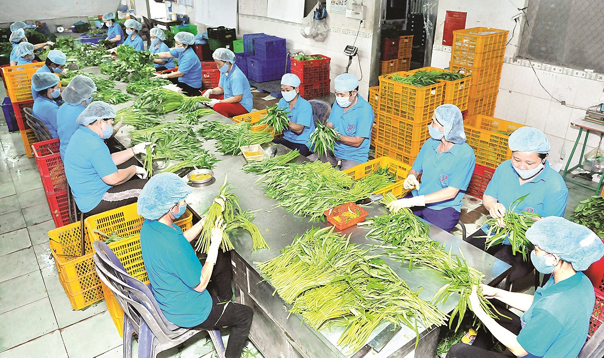 Nhìn lại hoạt động xuất khẩu nông sản và giải pháp cho năm 2019 (24/1/2019)