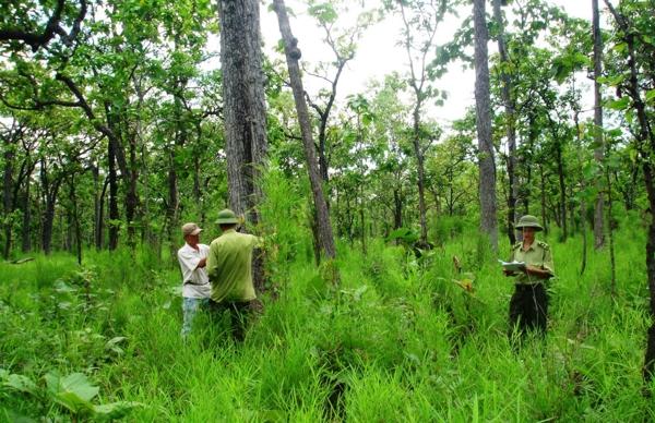 Làm sao để cộng đồng thực sự làm chủ rừng? (14/1/2019)
