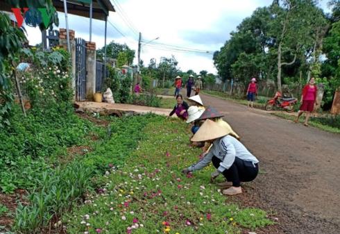 Xuân về trên xã Nông thôn mới Ea Tar,  huyện Cư M'gar, tỉnh Đắk Lắk (25/1/2019)