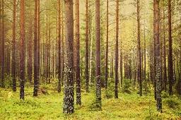 Metsa: Mô hình phát triển rừng bền vững ở Phần Lan (15/10/2019)