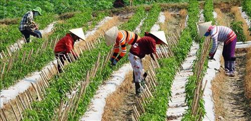 Huyện Đại Từ, tỉnh Thái Nguyên, đẩy mạnh chuyển đổi cơ cấu cây trồng, thích ứng biến đổi khí hậu  (9/10/2019)