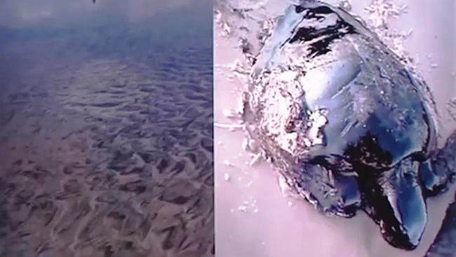 Các bãi biển ở Brazil ô nhiễm nặng vì sự cố tràn dầu (11/10/2019)