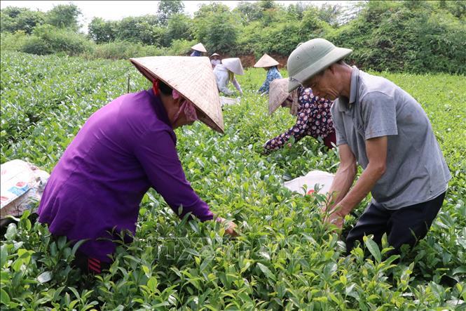 Thay đổi tư duy sản xuất để nâng cao giá trị xuất khẩu cho sản phẩm chè và cà phê Việt Nam (21/10/2019)