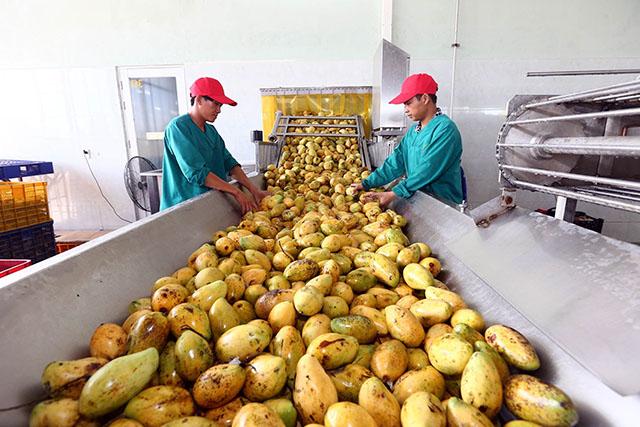 Phát huy vai trò của doanh nghiệp trong chuỗi giá trị nông sản (30/10/2019)