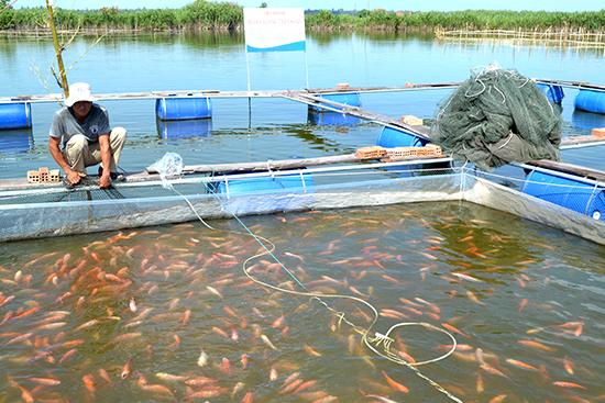 Phát triển các mô hình nuôi trồng thủy sản thích ứng với biến đổi khí hậu (7/10/2019)