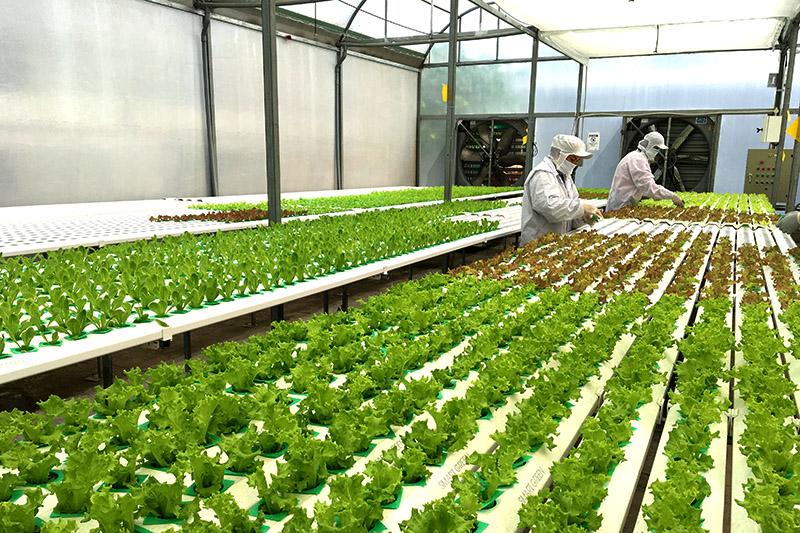 """Loạt bài """"Đào tạo nông dân chủ động tham gia nông nghiệp 4.0"""". Bài cuối với nhan đề: """"Đào tạo nông dân qua hệ sinh thái nông nghiệp 4.0"""" (24/10/2019)"""