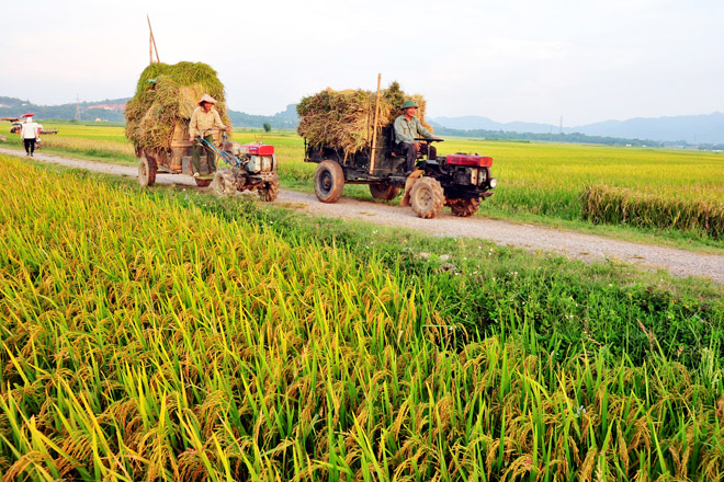 Nhu cầu về lương thực, thực phẩm ngày một gia tăng, vậy làm sao để ổn định và đáp ứng nhu cầu này của người dân? (3/10/2019)