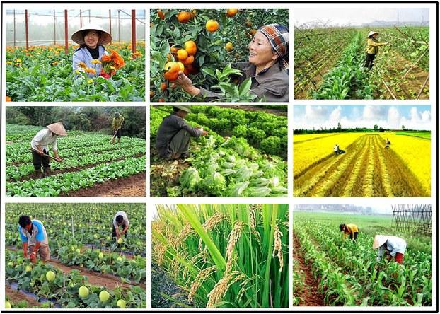 Nông nghiệp công nghiệp - xu hướng thích ứng với biến đổi khí hậu (23/10/2019)