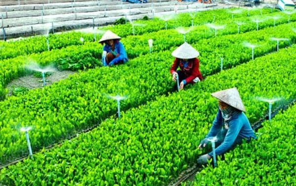 Nâng cao hiệu quả Hợp tác xã nông nghiệp (25/10/2019)