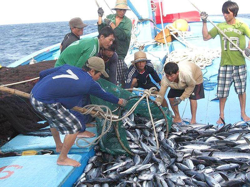 Gỡ thẻ vàng EU: Hướng tới phát triển bền vững nghề cá (28/10/2019)