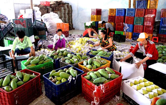 Cần giảm tổn thất sau thu hoạch để thúc đẩy xuất khẩu nông sản (29/10/2019)