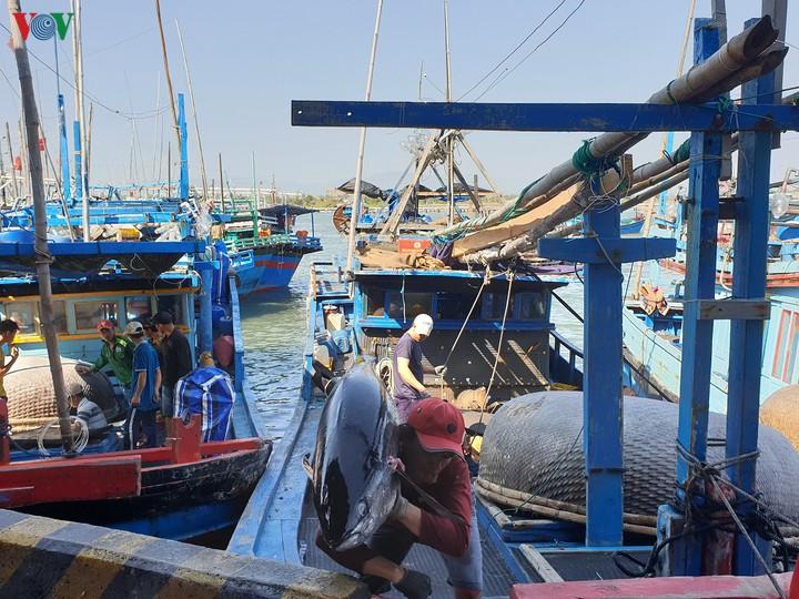 Hiện đại hóa nghề cá, cần chính sách đồng bộ (24/10/2019)