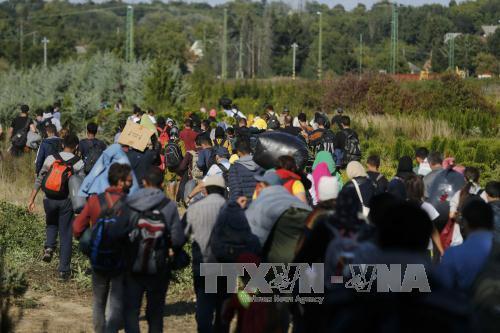 Hiểm họa khôn lường khi người di cư tìm cách đến Anh (3/11/2019)