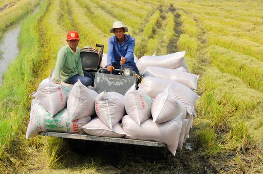 Hạt gạo Việt Nam: Nâng cao chất lượng, khẳng định thương hiệu (16/11/2019)