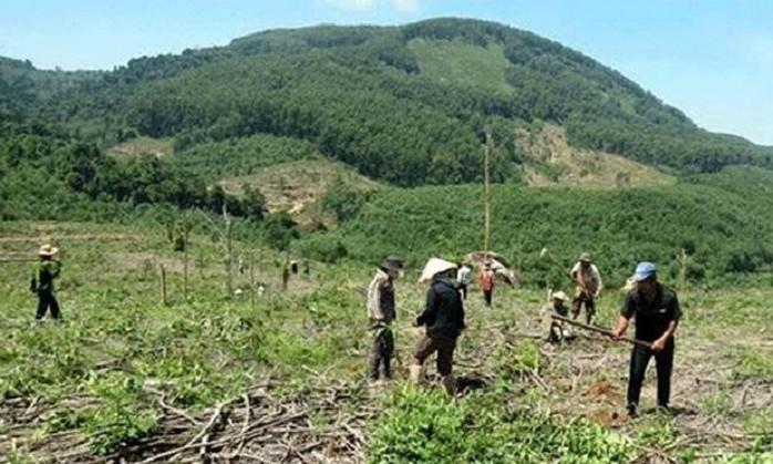 Quản lý đất nông lâm trường vẫn còn nhiều bất cập (27/11/2019)