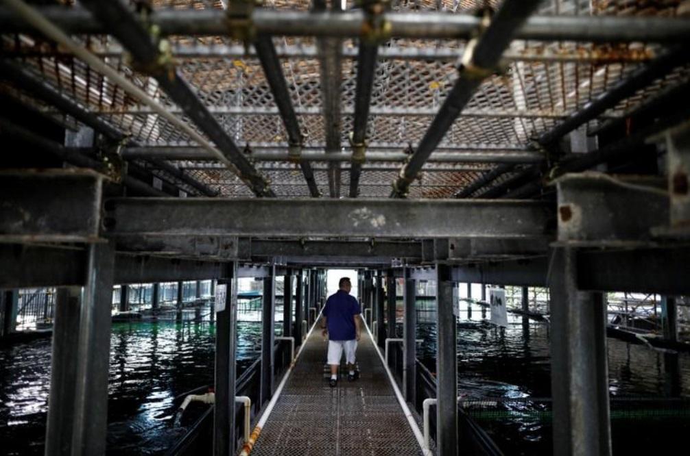 Singapore: Nuôi cá, trồng rau trên mái nhà (18/11/2019)