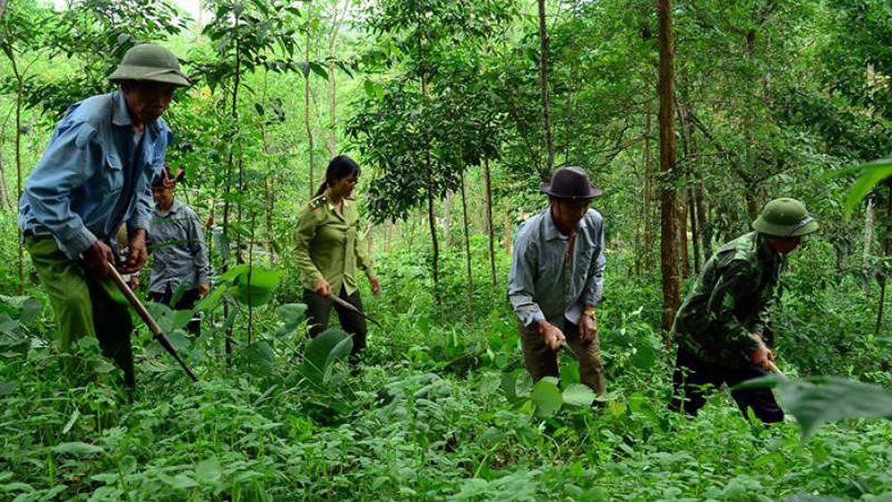 Tạo sinh kế bền vững cho cộng đồng để bảo vệ và phục hồi rừng tự nhiên (14/11/2019)