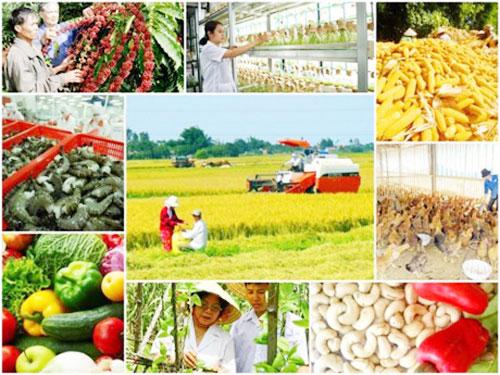 Tạo động lực mới cho hợp tác xã nông nghiệp phát triển (30/11/2019)