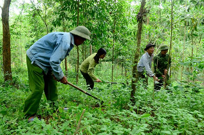 Quản lý bảo vệ rừng ngay từ đầu mùa khô (2/11/2019)