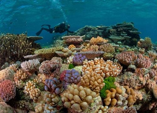 Rạn san hô Great Barrier tại Austrailia, rạn san hô lớn nhất thế giới, đã bước vào mùa sinh sản năm 2019 (19/11/2019)