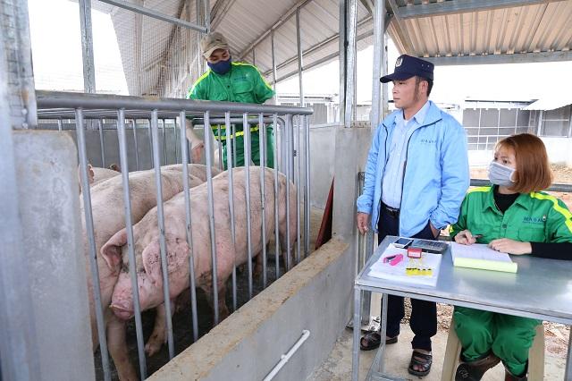 Tăng cường kiểm soát buôn lợn qua biên giới, bình ổn thị trường trong nước (26/11/2019)