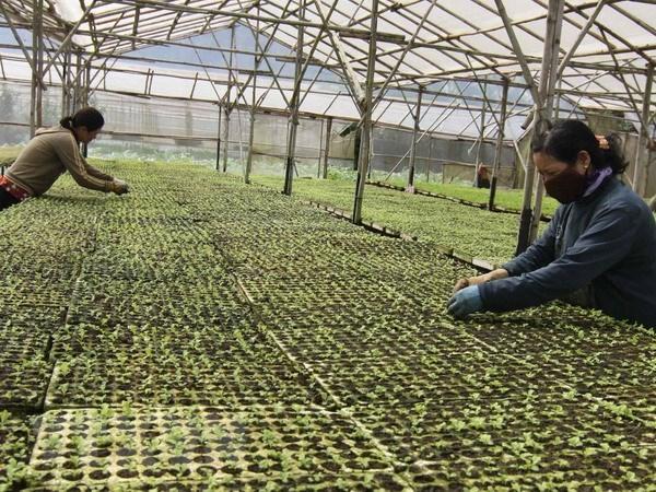 Tạo động lực cho Hợp tác xã Nông nghiệp phát triển (29/11/2019)