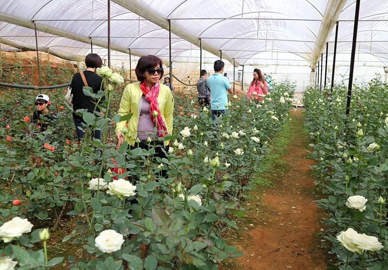 Lâm Đồng phát triển tiềm năng hoa (23/12/2019)
