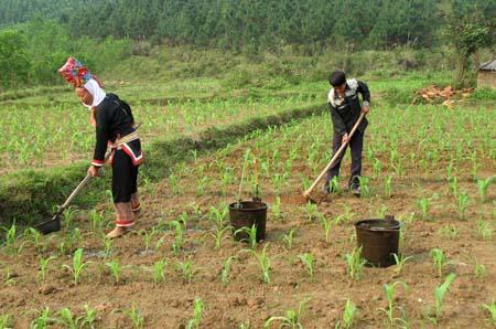 Giải quyết đất ở, đất sản xuất cho vùng đồng bào dân tộc thiểu số, những vấn đề đặt ra (7/12/2019)