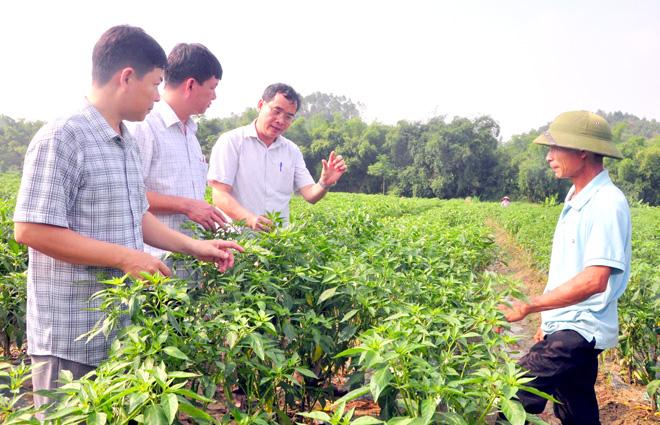 Liên kết sản xuất tạo động lực phát triển nông nghiệp (24/12/2019)