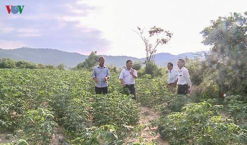 Sử dụng xăng sinh học góp phần phát triển kinh tế nông thôn (16/11/2019)