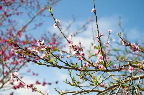 Cảm nhận không gian xuân tươi vui, qua những giai điệu rộn ràng, náo nức của các bài hát mùa xuân (17/2/2019)