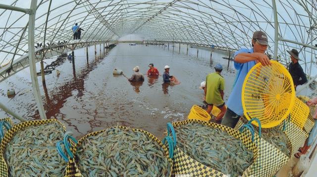 Ngành thủy sản Đồng bằng sông Cửu Long thích ứng với biến đổi khí hậu (13/2/2019)