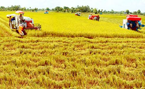 Sáng nay, tại tỉnh Đồng Tháp, khai mạc Hội nghị thúc đẩy sản xuất tiêu thụ lúa gạo vùng Đồng bằng Sông Cửu Long. (Thời sự sáng 26/2/2019)