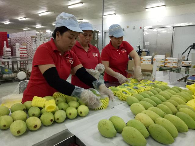 Sau gần 10 năm đàm phán, từ hôm nay, quả xoài của Việt Nam chính thức được cấp phép vào thị trường Mỹ (Thời sự chiều 18/2/2019)