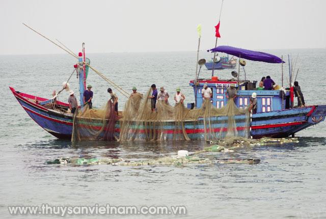 Bình Định phát huy vai trò cộng đồng trong bảo vệ nguồn lợi thủy sản (11/2/2019)