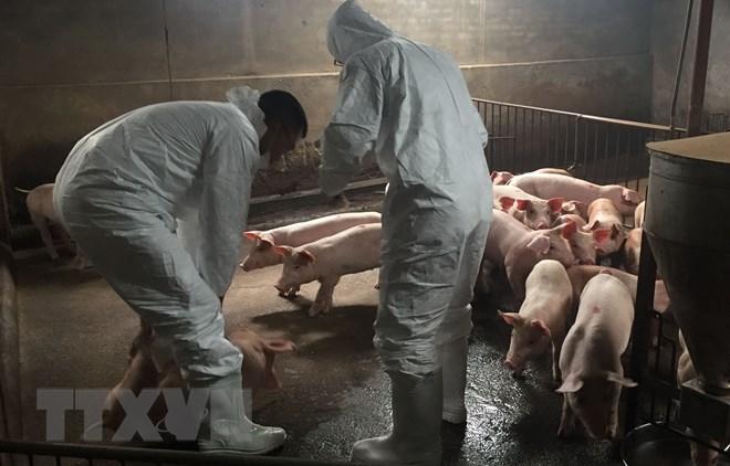 Thủ tướng Chính phủ chỉ đạo các bộ ngành địa phương cấp bách khống chế dịch tả lợn châu Phi (Thời sự sáng 21/2/2019)