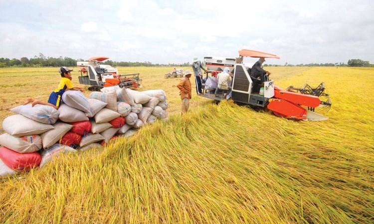 Giải cứu lúa gạo ở Đồng bằng Sông Cửu Long, có phải chỉ là giải pháp tình thế? (22/2/2019)