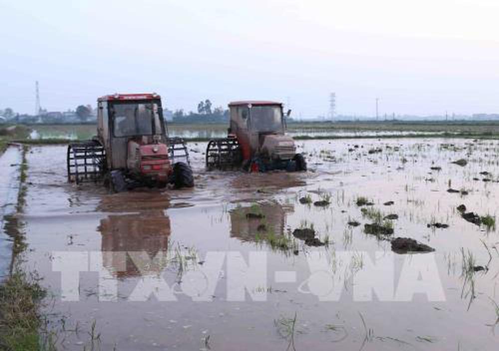 Nhiều địa phương vùng Đồng bằng Bắc Bộ đã lấy đủ nước phục vụ gieo cấy vụ Đông Xuân 2019, đạt hơn 92% kế hoạch (Thời sự đêm 16/2/2019)