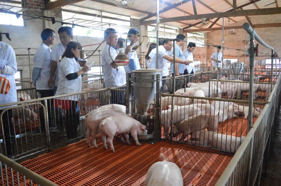 Nâng cao công tác thú y – Động lực tăng trưởng ngành chăn nuôi (16/2/2019)