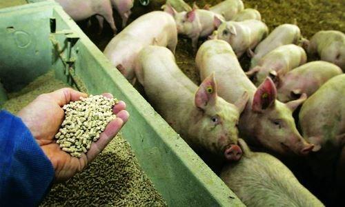 Hướng đến không sử dụng kháng sinh trong chăn nuôi (3/2/2019)