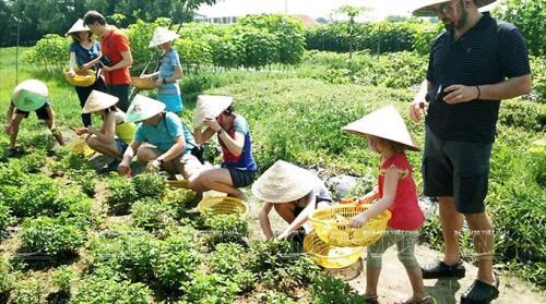 Phát triển du lịch nông nghiệp nông thôn – Giải pháp xây dựng nông thôn mới (23/3/2019)