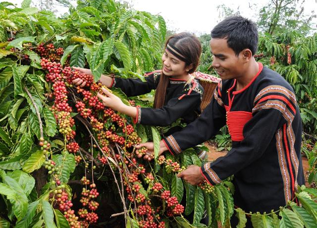Tại Hội thảo phát triển cà phê đặc sản Việt Nam: các chuyên gia cho rằng, để tiếp tục nâng cao giá trị cà phê Việt Nam – hãy phát triển cà phê đặc sản (Thời sự đêm 10/3/2019)