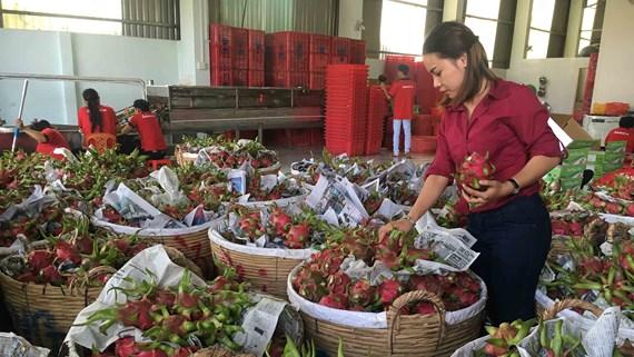Xuất khẩu trái cây đến năm 2020 tập trung vào những cây trồng chủ lực (19/3/2019)