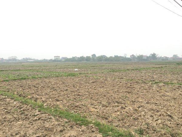 Yên Dũng Bắc Giang: Chưa đền bù giải phóng mặt bằng, người dân đã phải bỏ hoang ruộng (27/3/2019)